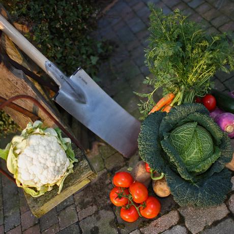 Groenteplanten & Kruiden