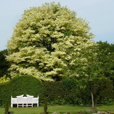 Grotere solitaire bomen