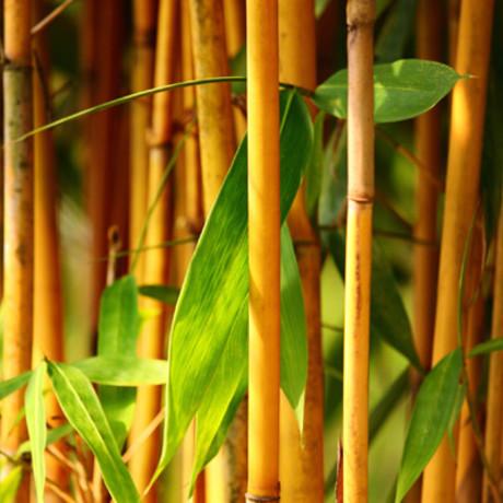 Bamboe & Siergrassen