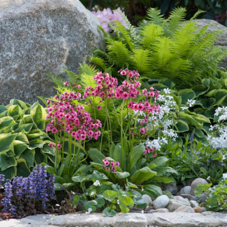Vaste planten voor de (half)schaduw