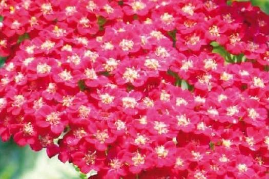 Planten Voor Bijen.Vaste Planten Die Vlinders En Bijen Helpen Belleplant