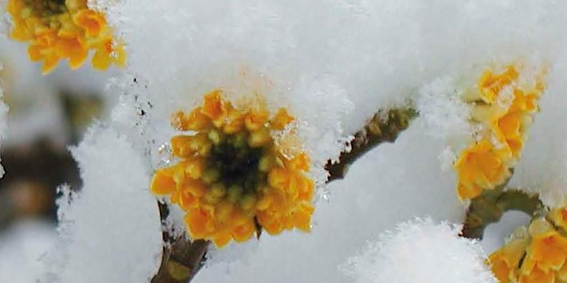 Kleurrijke winteraccenten