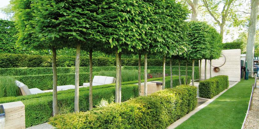 Heeft jouw tuin een boom?