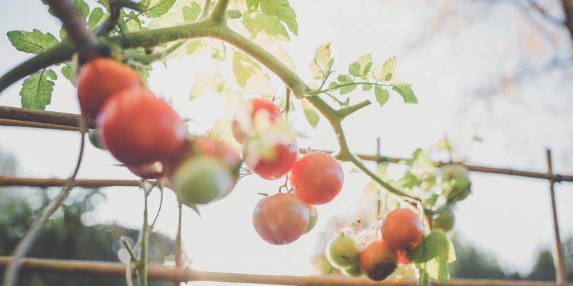 Verse kruiden en groenten uit eigen tuin