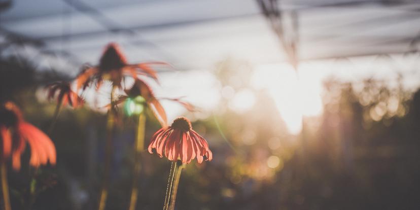 Je tuin voorbereiden op de volgende hete zomer