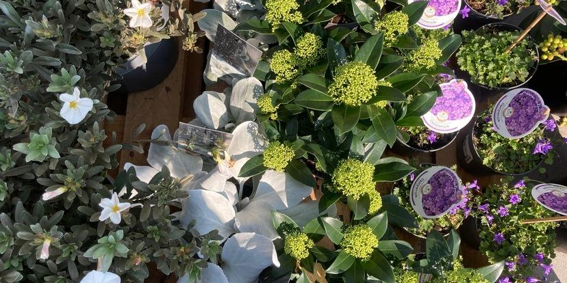 Onze persoonlijke TOP 7 van vaste planten en van heesters
